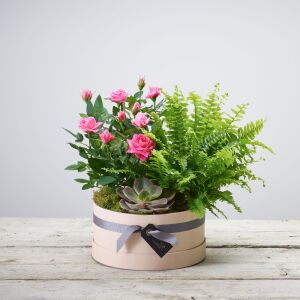 FLORIST CHOICE PLANT ARRANGEMENT